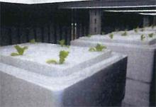 完全無農薬栽培ルーム