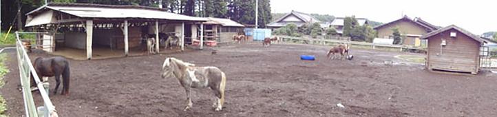 しゅうちゃん牧場