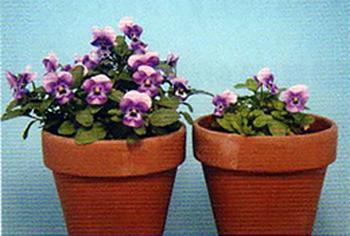 左:マイクロバランス10%を用土混和した生育状態
